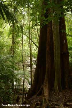 Palenque Dschungel